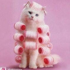 Such a pretty pink pinup kitty.   #topvintage #topvintageboutique #kitty #pinupstyle #fluffycat #cutie #prettyinpink #picoftheday