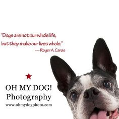 """""""#Dogs are not our whole life, but they make our lives whole —R.A. Caras #ohmydogphotography #bostonterriers #bostonterrierlove #dogs #dogsofinstagram #dogstagram #sandiegodog"""" Photo taken by @ohmydogphoto on Instagram, pinned via the InstaPin iOS App! http://www.instapinapp.com (02/13/2015)"""