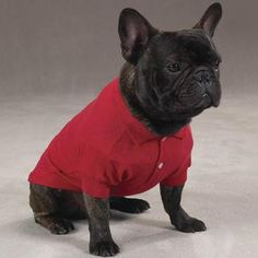 A Red Polo Shirt is a staple items for your dog's wardrobe! Our Dog Polo Shirt is a simple, tailored and sporty look for dogs. On any occasion, you really can't go wrong with a polo shirt for dogs!