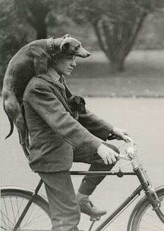 If I could travel by bike with my cat(s) like this I would BE ALL OVER THAT SHIT.
