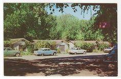 Austin's Resort Cabins Cars Clear Lake Highlands California 1950s postcard