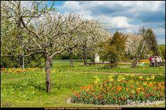 Britzer Garten - Blumenschau Tulipan #BritzerGarten #Britz #Neukölln #Berlin #Deutschland #Germany #biancabuergerphotography #igersgermany #igersberlin #IG_Deutschland #IG_berlincity #ig_germany #shootcamp #pickmotion #berlinbreeze #diewocheaufinstagram #berlingram #visit_berlin #canon #canondeutschland #EOS5DMarkIII #5Diii #flowers #flower #Blumen #Blume