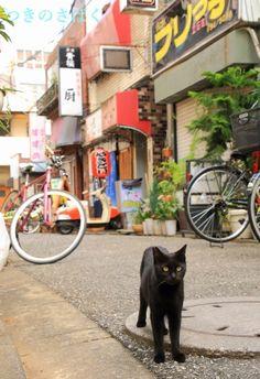 Black cat. Tateishi, Tokyo 2015. 立石 Photo by Tsukinosabaku つきのさばく #alley #cats #Japan