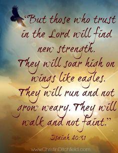 but those who hope in the Lord will renew their strength. Isaiah 41:9 pero los que confían en el Señor renovarán sus fuerzas. Isaías 41:9