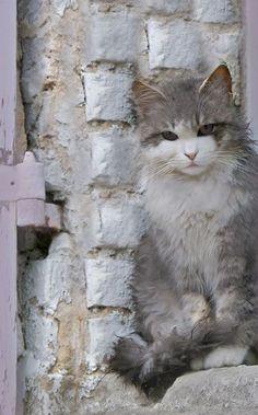 Spain ~ CAT