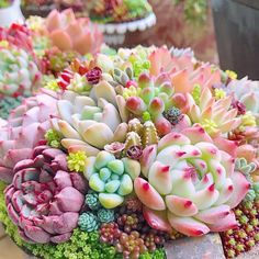 Indoor Cactus Plants, Fruit Plants, Nature Plants, Edible Plants, Succulents In Containers, Cacti And Succulents, Planting Succulents, Planting Flowers, Succulent Gardening