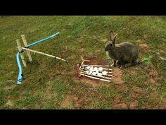 Basic Wilderness Survival Tips - Survival Survival Shelter, Survival Tools, Wilderness Survival, Camping Survival, Outdoor Survival, Survival Prepping, Rabbit Traps, Bird Trap, Snare Trap