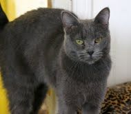 Bambi is an adoptable Domestic Medium Hair Cat in Colfax, IL. February 19, 2012, 8:20 pm...