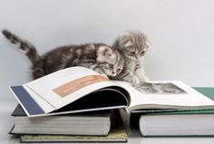cats are reading a book[