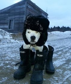 Bundled Up - Snowmageddon doesn't scare this pup. He's more than prepared for the oncoming storm.
