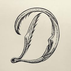 letras lettering letter tipo type typography tipografia inseto insect illustration design bug insecttering caligraphy