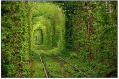 "Tunel del Amor~, Ucrania Giant trees surround this old train tunnel located in Kleven, Ukraine. The magical-looking place is nicknamed ""The Tunnel Of Love"" by locals because it is a popular spot for couples to visit Beautiful Places In The World, Oh The Places You'll Go, Places To Travel, Places To Visit, Amazing Places, Tourist Places, Amazing Things, Travel Destinations, Wonderful Places"