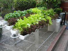 Verde que te quiero verde: agricultura orgánica urbana - Aire de Santa Fe