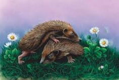 photographs and paintings of hedgehogs - Google Search