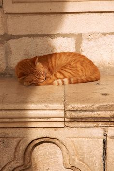 Ginger cat asleep on a marble seat