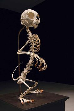 Lee s'amuse à reconstituer les squelettes des héros de cartoons les plus emblématiques Tom et Jerry