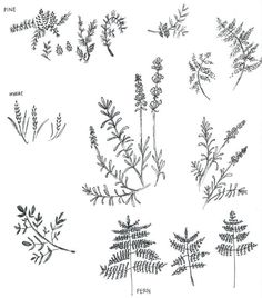 nature sketches | by Margot Lied