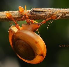 """help together...."" by bug eye :), via 500px."