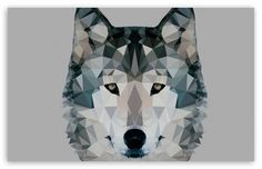 Low Polygonal Wolf wallpaper