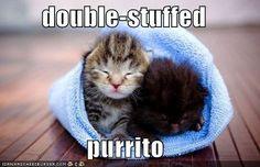 Towel Cat, Cat with Towel, Purrito~