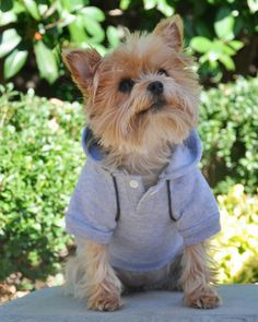 """The Best of Style and Function"" NEW Athletic Styled Heavyweight Fleece Sport Sweatshirt Hoodie for Dogs. Shown in Color Glacier Heather Gray. Available in sizes for Small through Big sized Dogs. Animal Design, Dog Design, Dog Suit, Sports Sweatshirts, Dog Games, Pet Fashion, Dog Hoodie, Dog Friends, Baby Animals"