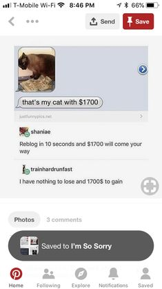 Sharing for the cute cat<<<you know you want the money😂 Tumblr Stuff, My Tumblr, Tumblr Posts, Tumblr Funny, Just In Case, Just For You, Just For Laughs, Laugh Out Loud, Dumb And Dumber