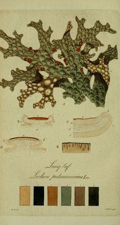 Svenska lafvarnas färghistoria Stockholm :Tryckt hos C. Delén,1805-[1809] biodiversitylibrary.org/page/13683603