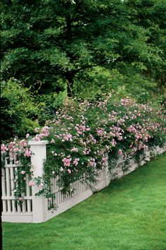 Backyard landscaping along fence climbing roses 38 new ideas Backyard landscaping along fence climbi