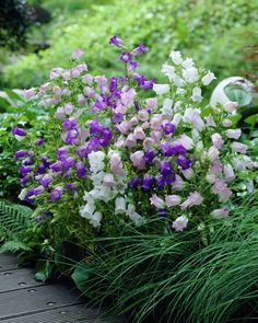 Find and filter plants and flowers with exact criteria. Love Garden, Dream Garden, Garden Seeds, Garden Plants, Flowers Perennials, Planting Flowers, Shade Loving Flowers, Bell Gardens, British Flowers