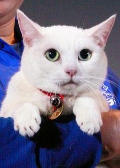 かわいい猫にメロメロ!映画『猫侍』ティーチインイベント フォトギャラリー