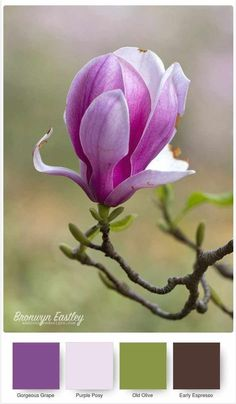 Good Morning Magnolia – Stampin' Up! Colour Pallette, Colour Schemes, Color Combos, Flor Magnolia, Magnolia Flower, World Of Color, Color Of Life, Colorful Flowers, Beautiful Flowers