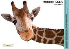 Leuke muursticker giraf ;27cm x 19cm ;De stickers zijn al gesneden.Gemaakt van de beste kwaliteit ;vinyl, en hebben een supper matte finish.Verwijder de sticker van de achtergrond . Dit gaat makkelijker als je de sticker iets buigt, ;zodat je ziet waar de snijlijn loopt .Plak  ;hem op een vlakke ondergrond (dit kan zelfs een met  ;latex behandelde muur zijn).  ;De stickers zijn afwasbaar , waterbestendig & plakken op elke vlakke ondergrond.
