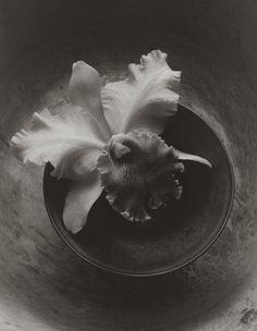 Still Life 174, platinum-palladium print by Kenro Izu