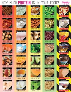 """Do you guys know how much PROTEIN is in your food?! I thought it would be wise to show the recommended serving size along with the calories so that there'd be some type of an even playing field here. Also be aware that just because a food shows up lower than another food on this chart, it does not mean it is """"unhealthy"""" or that you should avoid it like the plague. All foods are created to bring us all sorts of different nutrients. Cholesterol Symptoms, Healthy Cholesterol Levels, Reduce Cholesterol, Cholesterol Diet, Nutrition Chart, Health And Nutrition, Health And Wellness, Nutrition Shakes, Nutrition Guide"""
