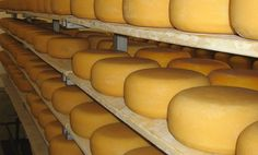 Gunn's Hill Artisan Cheese - Woodstock, ON. Right next to the dairy farm that all the milk for the cheese comes from!