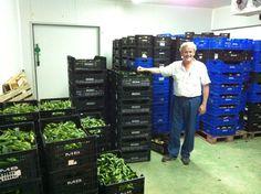 Los pimientos verdes de Longane Urdaibai, recién recolectados. Compra directamente al productor en hermeneus.es
