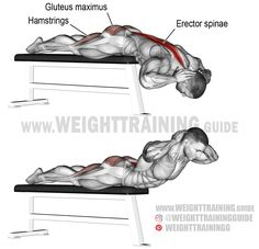 Flat bench hyperextension. A compound exercise. Target muscle: Erector Spinae. Synergists: Gluteus Maximus, Hamstrings, and Adductor Magnus. Note: Hook your heels under the bench.