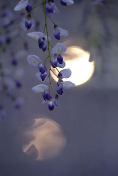 Purple flowers by moonlight