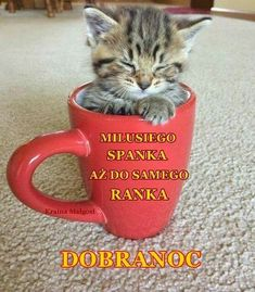 Nie wiem o co kaman Baby Kittens, Cute Cats And Kittens, Good Night, Good Morning, Kitten Gif, Pretty Cats, Man Humor, Motto, Animals And Pets