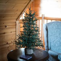 Carmel Pine Artificial Tree w/ Cones Burlap Base - Vickerman, Green Pine Christmas Tree, Rustic Christmas, Christmas Wreaths, Christmas Decorations, Christmas Ornaments, Pine Tree, Victorian Christmas, Primitive Christmas, Green Christmas