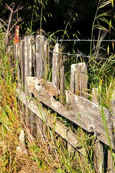 """""""Tired Tomales Fence""""  Click the """"pinned from"""" link to purchase this print."""