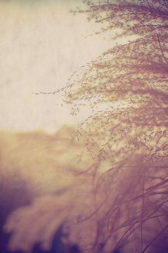 whisper tree