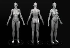ArtStation - Female Anatomy, Marc Brunet