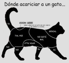 Dónde acariciar a un gato...