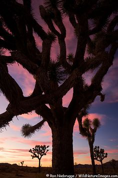 ✯ Sunset sky in Joshua Tree National Park, California