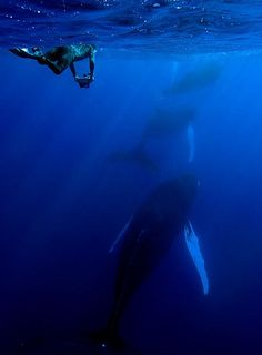 10 Jaw Dropping Photos of Diving with Whales - duck your head underwater at your next beach vacation, you never know what you might see.