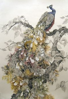 Lovely detailed peacock illustration by Aurel Schmidt.