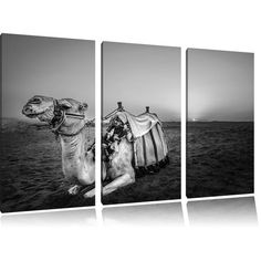 Camel at Sunset in Egypt 3 Piece Photographic Art Print Set on Canvas Home Loft Concept Canvas Home, Canvas Art, Canvas Prints, Frames On Wall, Framed Wall Art, Frames Direct, Animals Black And White, Painting Prints, Art Prints