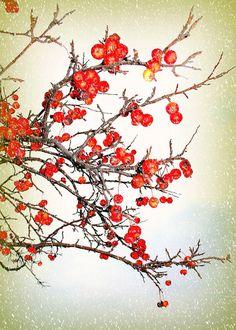 Winter Berries by JadeNewkirk on Etsy, $10.00