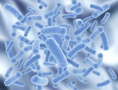 Probiotics are an important parts of your Candida diet. Learn which probiotics are best for tackling your Candida overgrowth, and how to choose a probiotic.